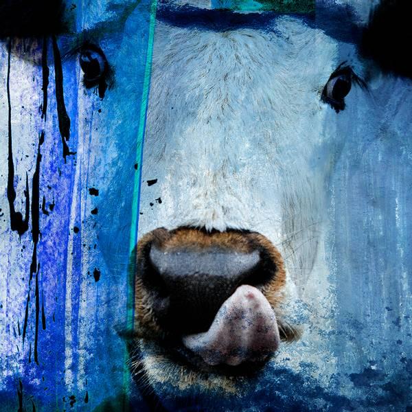 Bilde av Cow 20 x 20 cm Nr 27        -